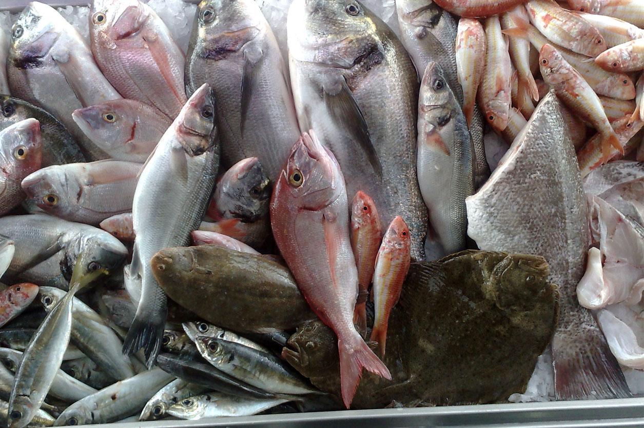 Peixe Fresco - Restaurante O Miguel (Setúbal)
